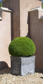 Bellamont Topiary - Spheres
